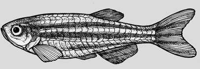 201606_09_zebrafish